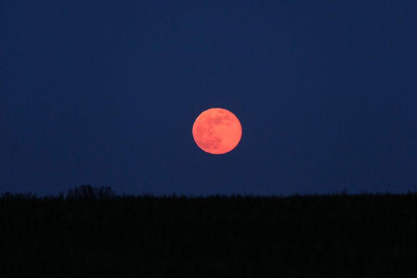 lună roz