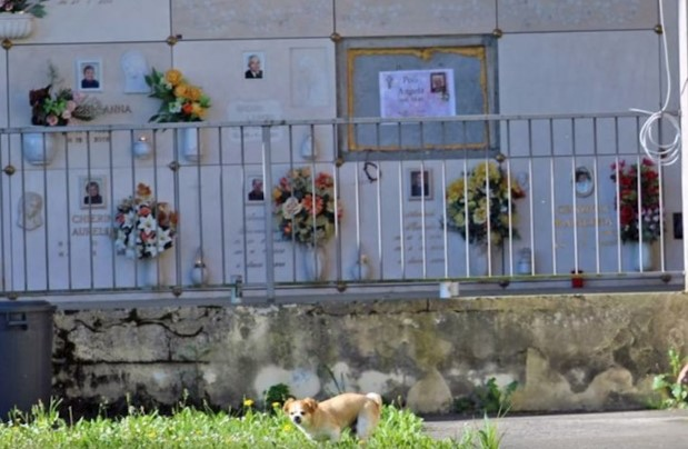 Un câine merge în fiecare zi un kilometru pentru a vizita mormântul stăpânului
