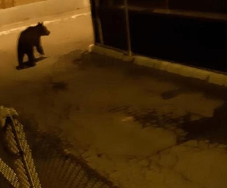 Ursul s-a întors pe străzi! Ro-Alert a sunat în această noapte pentru locuitorii din Câmpia Turzii.