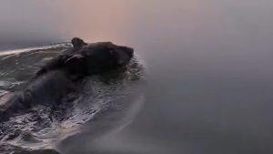 Momentul în care o familie salvează un urs al cărui cap era înţepenit într-un bidon de plastic, viral pe internet