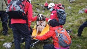 Operațiune de salvare pentru un Saint Bernard. Daisy se prăbușise pe cel mai înalt munte din Anglia FOTO
