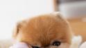 Top 5 animale influencer pe Instagram: Care este cel care câștigă 45.000 de dolari pentru o postare