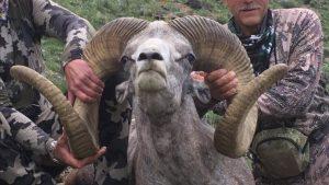 Dentistul care l-a ucis pe leul Cecil stârnește furie din nou. După 4 ani, a vânat un berbec sălbatic protejat