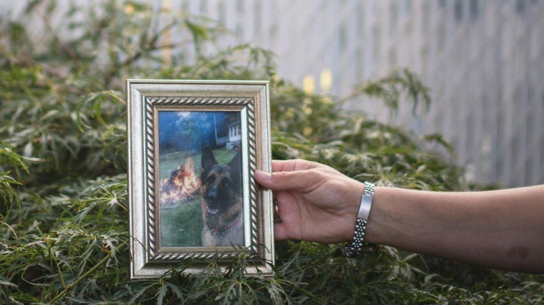 A murit Buddy, primul câine testat pozitiv cu Covid-19 în SUA. Cazul care arată cât de puțin știm despre coronavirus și animale