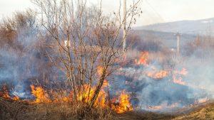 Cel puţin 5 oameni au murit în urma unui incendiu de vegetaţie produs în estul Ucrainei