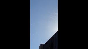 VIDEO. Mii de furnici zburătoare au invadat Marea Britanie. Meteorologii explică fenomenul