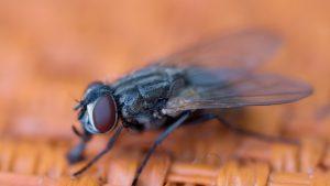 """Cum a reușit o muscă să arunce în aer o parte dintr-o casă, în timpul unei """"mici dispute"""" cu proprietarul"""