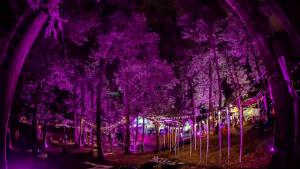 Senzoria: Festival de muzică în pădure, sâmbătă, la Iași. Numărul de bilete este limitat
