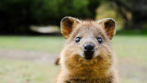 De ce video-urile cu animale drăguțe sunt bune pentru sănătate