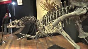 alozaur-schelet