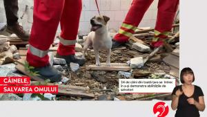 Zeci de câini se întrec pentru a-și demonstra abilitățile de salvatori