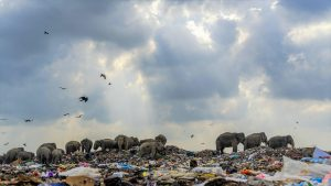elefanti-gunoaie
