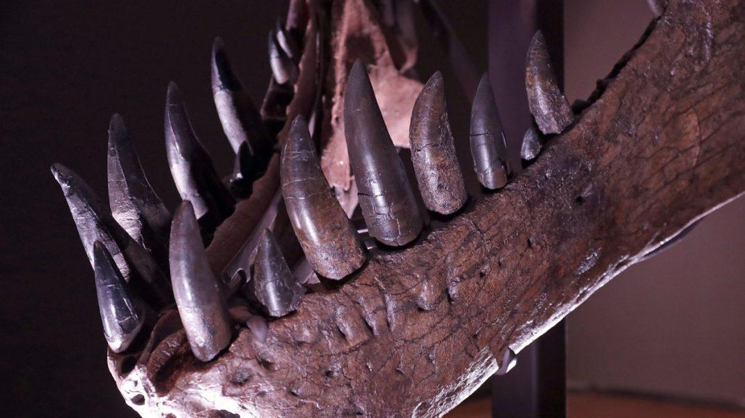 Suma record pentru care a fost vândută o fosilă găsită acum 28 de ani