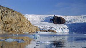 Încălzire globală: Groenlanda pierde 36 de mii de miliarde de tone de gheață până la sfârșitul secolului