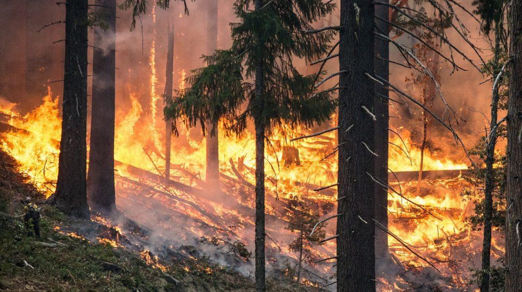 Cel puţin nouă oameni au murit în urma incendiilor de vegetaţie din estul Ucrainei