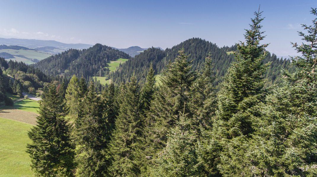 Pădurile ar putea fi salvate cu ajutorul dronelor