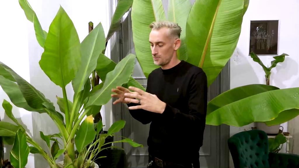 plante exotice la iași
