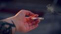 Tablouri din țigări, vândute pentru plantarea copacilor într-un parc din Constanța
