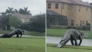 Un aligator gigantic a fost fotografiat în timp ce se plimba pe o stradă din Florida