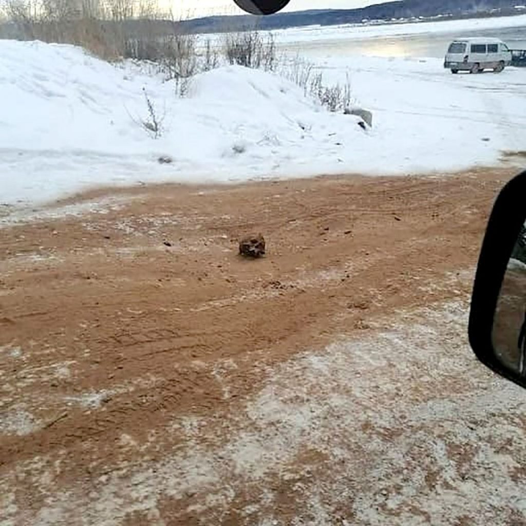 """Imagini șocante din Rusia. Un """"drum al oaselor"""" a fost descoperit pe o autostradă înghețată din Siberia"""