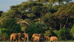 Elefanți Nigeria