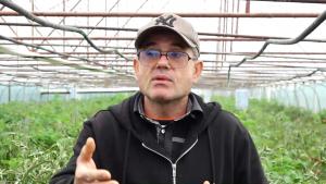 Subvenția pentru cultivatorii de roșii din Olt, redusă de la 3000 de euro la 2250 de euro. Reacția unui fermier