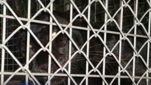 Un bărbat din Florida a fost atacat de leopardul pentru care plătise 150 de dolari ca să se joace cu el