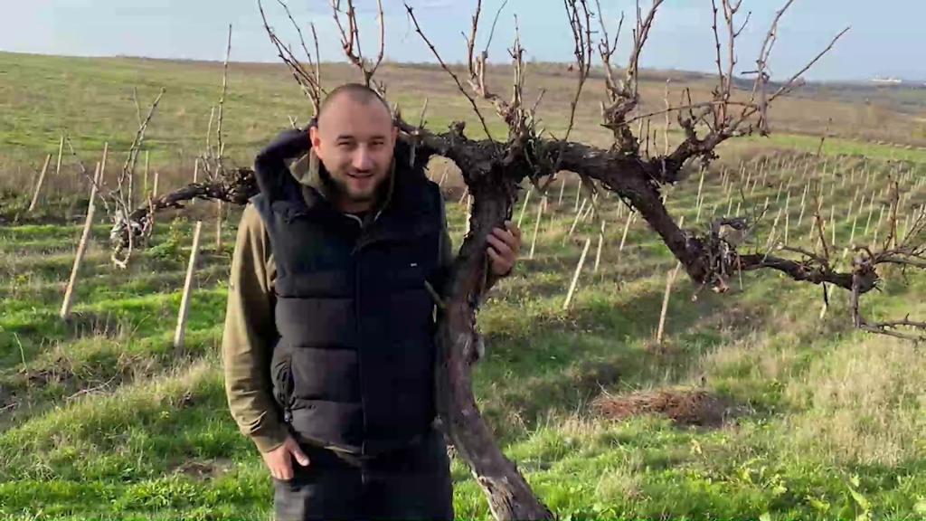 Comisia Europeană sprijină producătorii români de vin cu 12,4 milioane de euro. Reacția unui manager de podgorie de la Iași