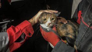 O pisică rănită a fost salvată de sub dărămăturile unui bloc din Izmir de către un câine poliţist