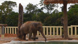 elefant-cambodgia