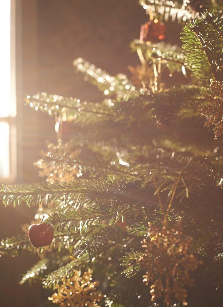 mere în bradul de crăciun
