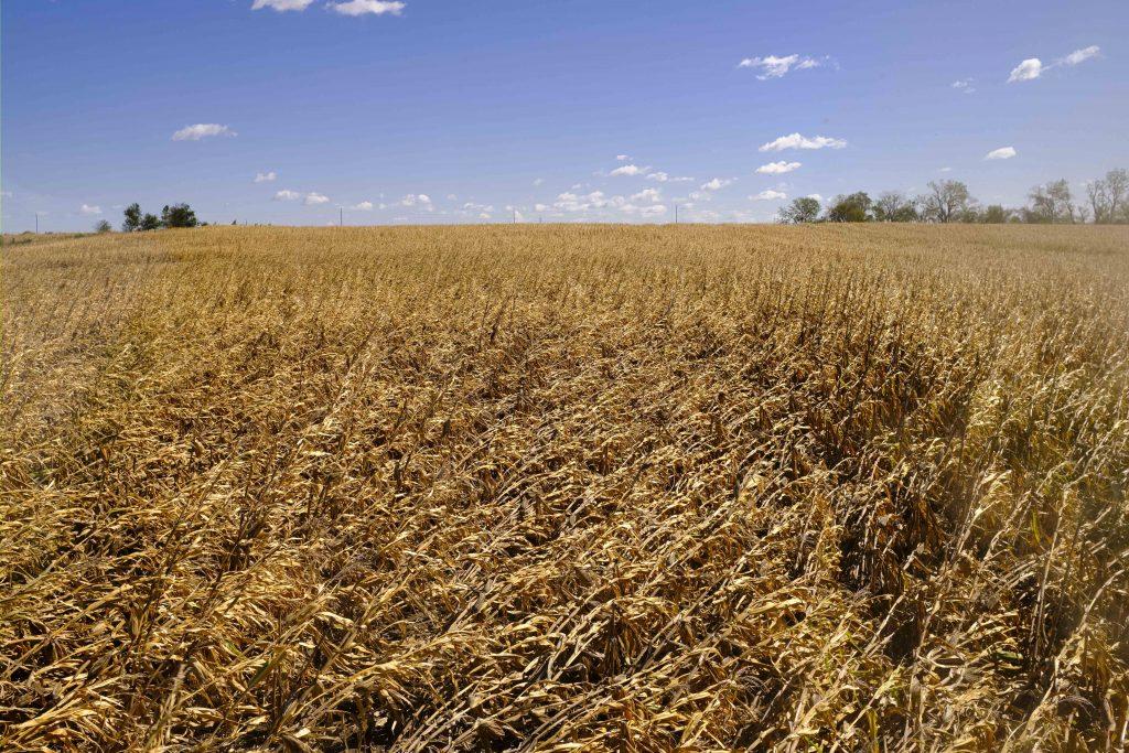 Iohannis, semnal de alarmă privind schimbările climatice în România: Vor fi temperaturi tot mai ridicate în timpul verii, deșertificare, secetă