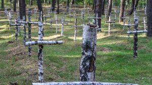Cruci-din-mesteacăn-la-mormintele-prizonierilor-din-al-doilea-război-mondial-din-Gross-Born