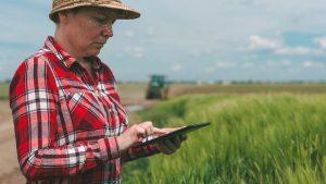 Tehnologii inovative în agricultură: Razele UV sunt folosite pentru culturile exterioare