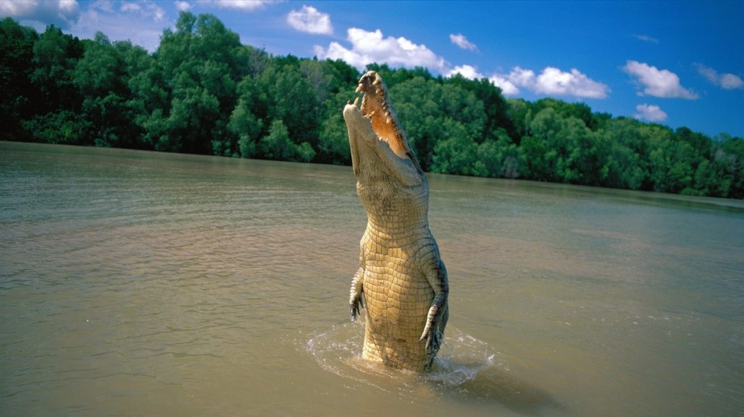 crocodil-australia