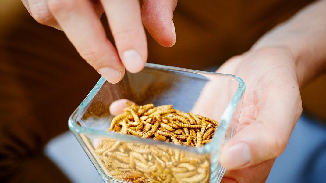 Consumul de insecte a fost aprobat de UE. Viermele de făină, cu un pas mai aproape de farfuriile europenilor