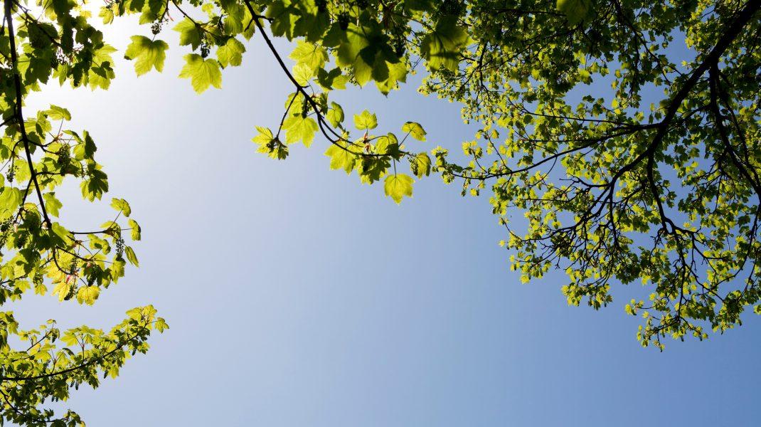 cer fără nori într-o zi de primăvară.