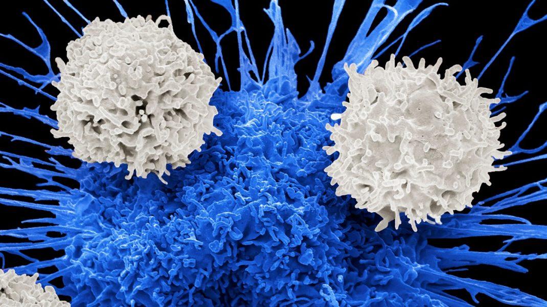Celule T