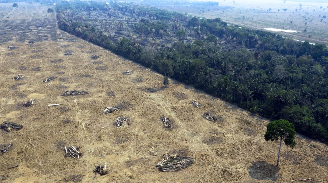Defrișări-în-pădurea-amazoniană