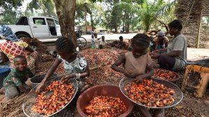 cacao-plantatie