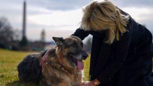 Câinii prezidențiali din SUA, invitați speciali la Puppy Bowl. Mesajul transmis de Jill Biden