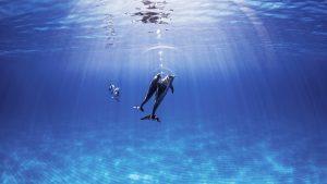 Studiu: Delfinii și balenele ajung să surzească din cauza poluării sonore din oceane