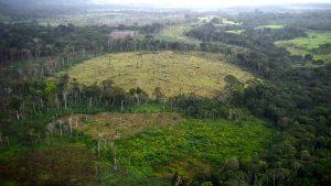 Defrișări Amazon
