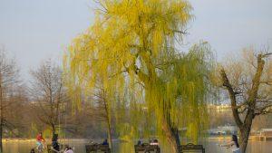 Construcții ilegale în parcul Regele Mihai - Herăstrău din Capitală, oprite de procurori
