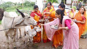 Excrementele şi urina de vacă, folosite în tratamente anti-Covid în India. Ce spun oamenii de ştiinţă