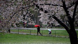 Un bărbat se plimbă pe o alee dintr-un parc și ține o umbrelă deasupra capului.