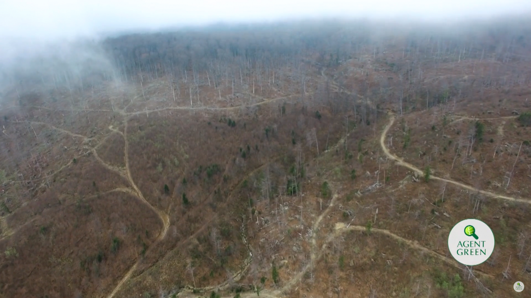 Pădure defrișată din România