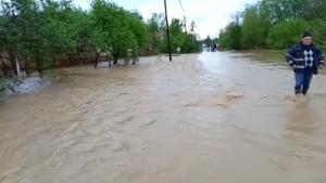 VIDEO. Inundații în Satu Mare: 100 de oameni au fost evacuați. Sute de animale moarte sau dispărute. Meteorologii au emis Cod Roșu