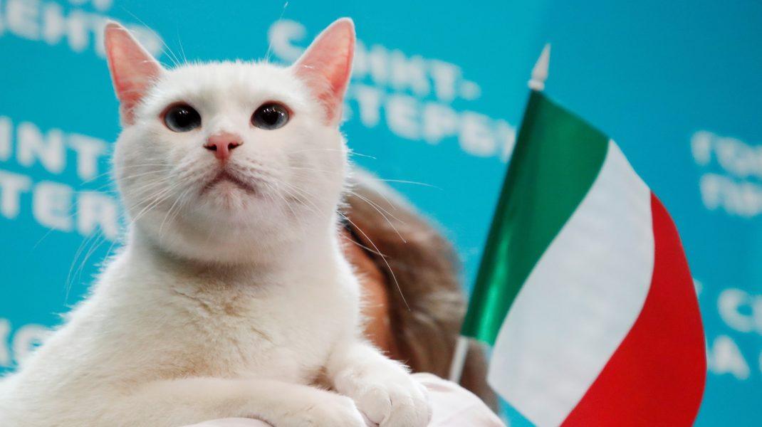 pisica este un bitcoin)