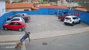 accident câine Botoșani